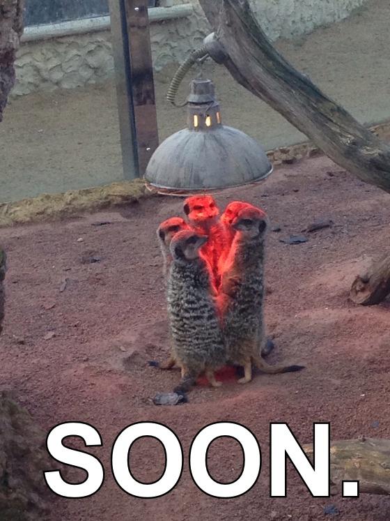 meerkat-heat-lamp